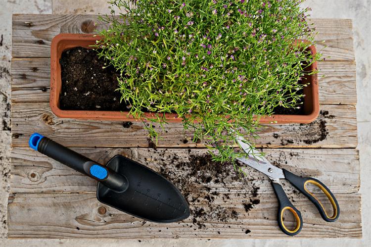 Como crear un jardin con balcon